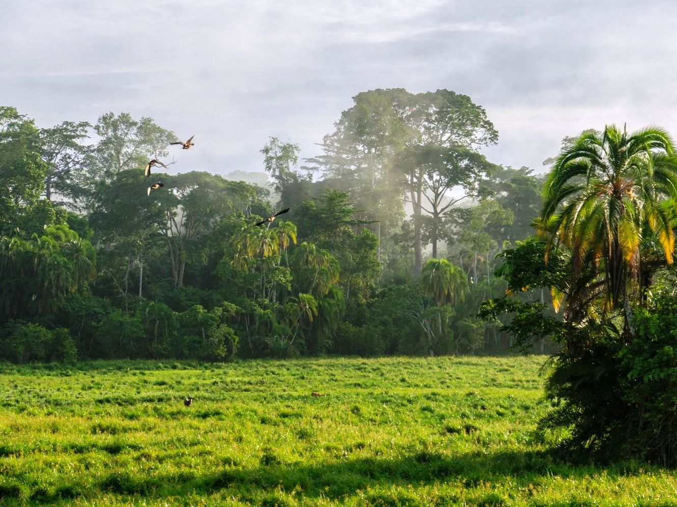 Lobéké National Park in Cameroon (Image with kind permission by: Philipp Laage | www.philipplaage.de)