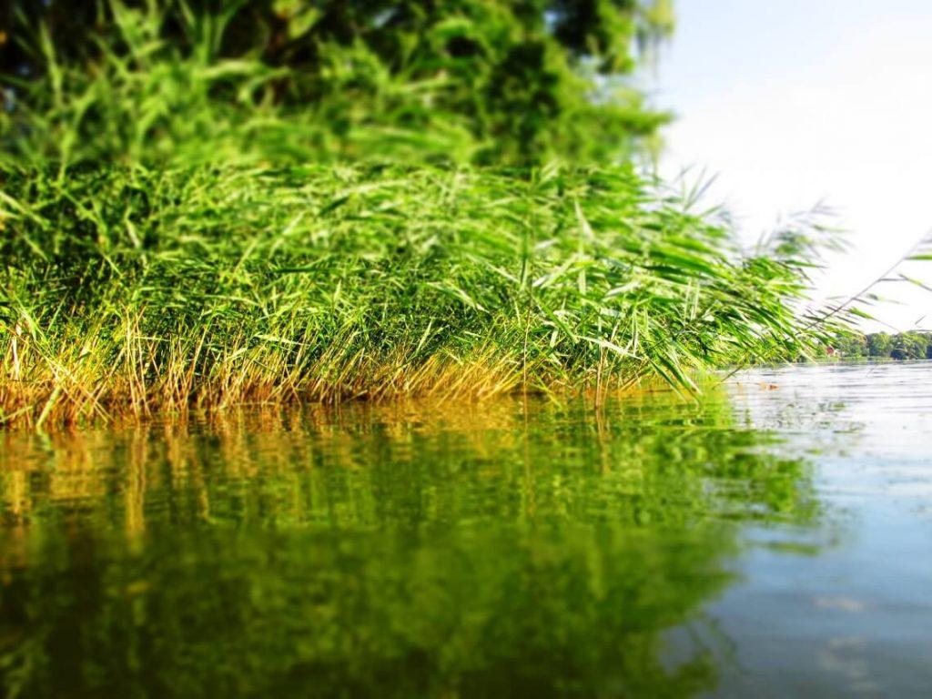 BVNG-Mitglied Thomas Schumann im Interview über die wirtschaftlichen Risiken von Wassermangel