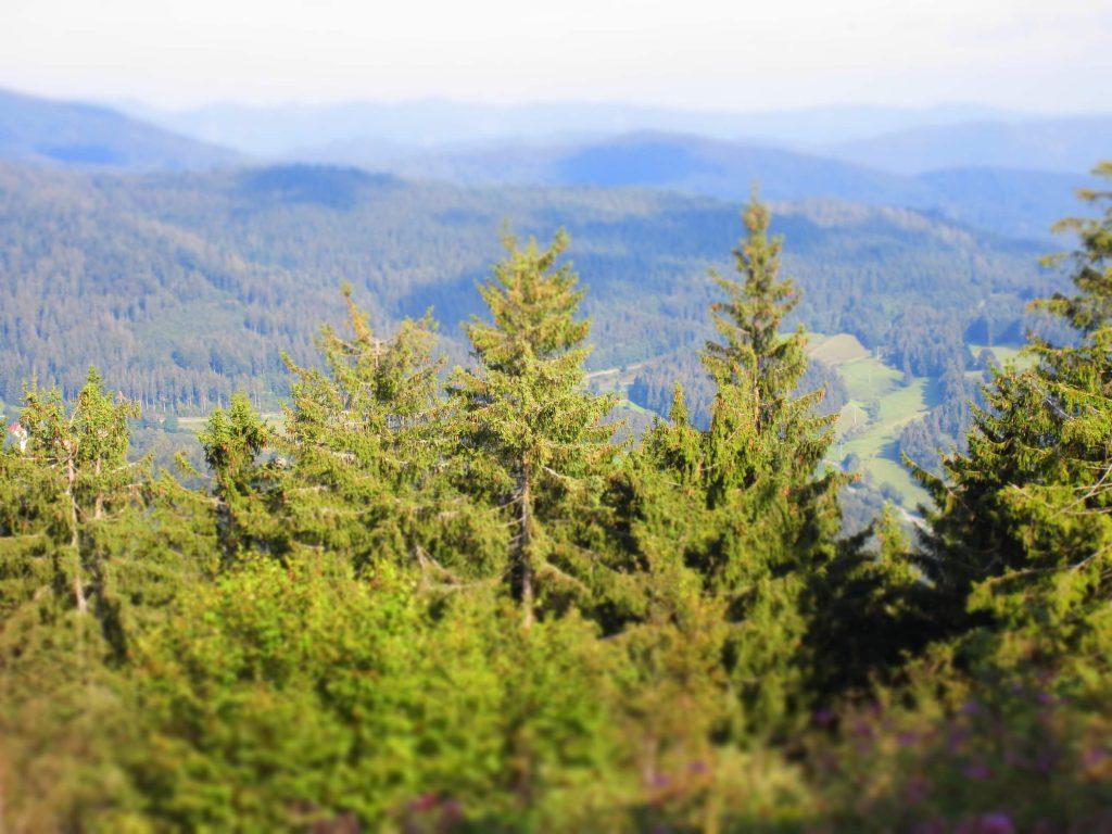 5 nach Zwölf! – CO2-Preis ist Tarifvertrag mit der Zukunft – Stellungnahme der Bundesvereinigung Nachhaltigkeit zum Klimaschutzpaket der Bundesregierung