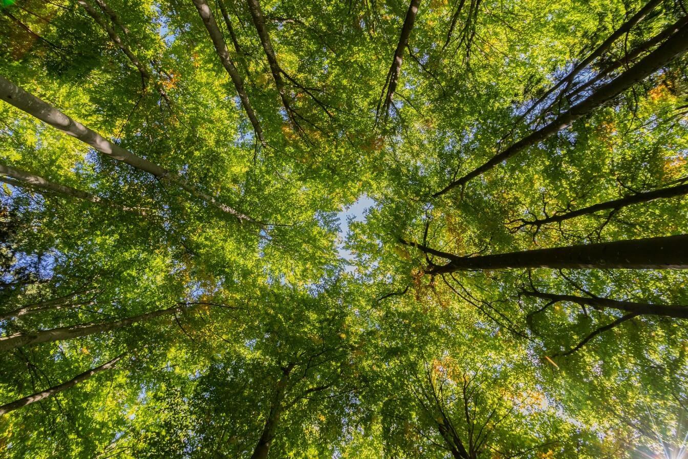 Rettet die Grüne 1 unser Klima?